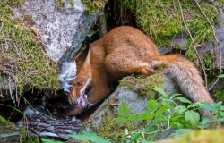 Le foto vincitrici del Wildlife Photographer of the Year 2020